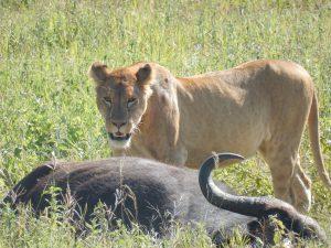 Tanzania road safaris