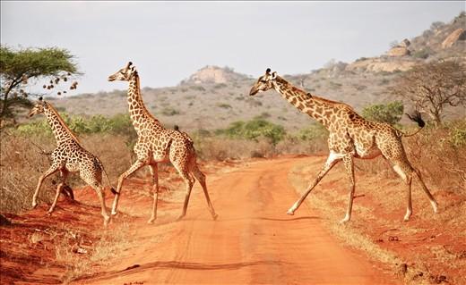 Marathon Safari 1-Day Tsavo East