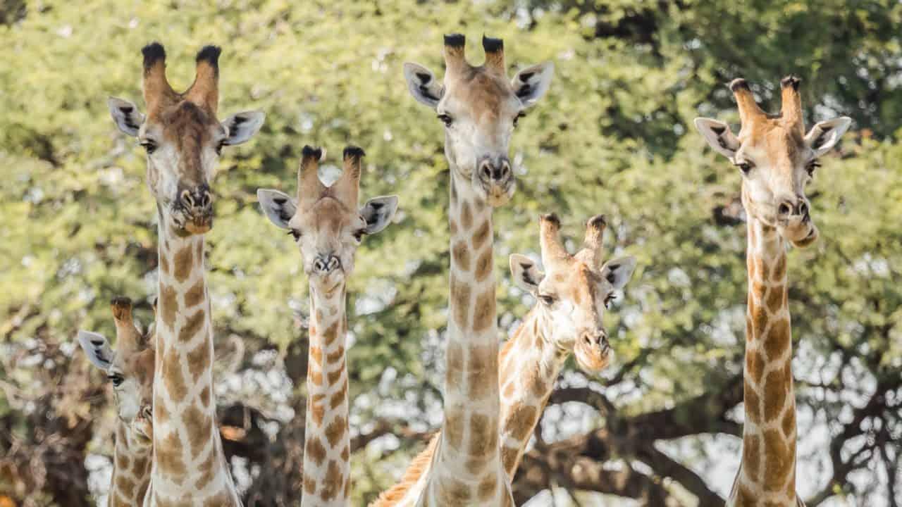 10 Days Ethiopia Safari