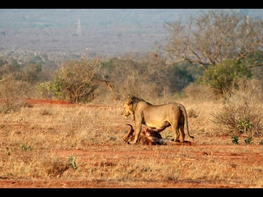 4-Days Arusha Tarangire Serengeti Ngorongoro Arusha