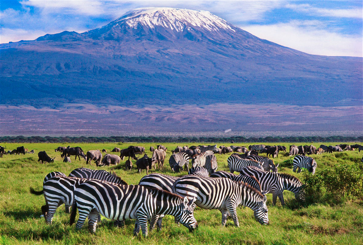 Tusker Safari – 8 Days 7 nights Nairobi – Amboseli – Tsavo west – Mombasa