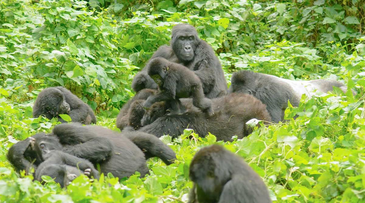 6 Days Uganda Gorilla Safaris