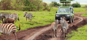 5-Days Mikumi Nationa Park and Selous Game Reserve