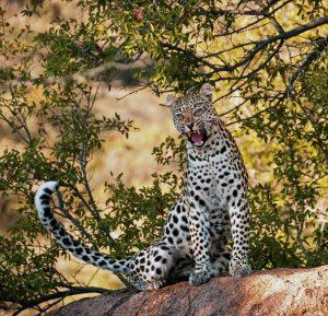 Chui Safari 6-Days 5-Nights Masai Mara By Flight