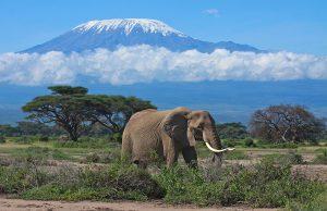 Amboseli and Tsavo Safari
