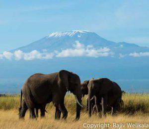 Tsavo East Amboseli safari
