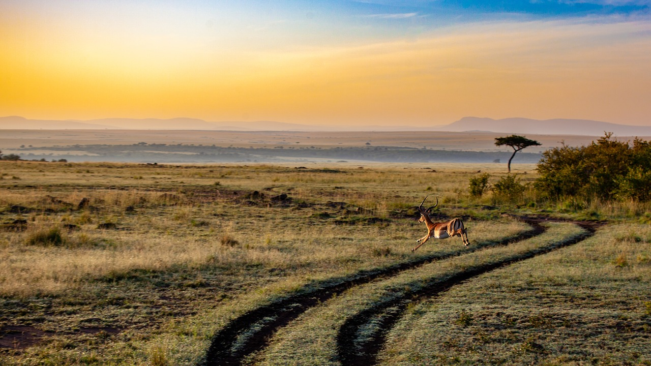 Crater Safari 5 Days Ngorongoro Serengeti L Manyara