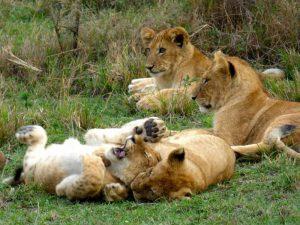 7 Days Aberdares (Tree Hotel) / Nakuru / Samburu / Masai mara