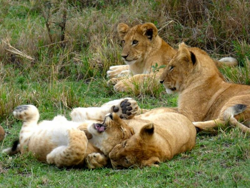 7 Days Aberdares / Nakuru / Samburu / Masai mara