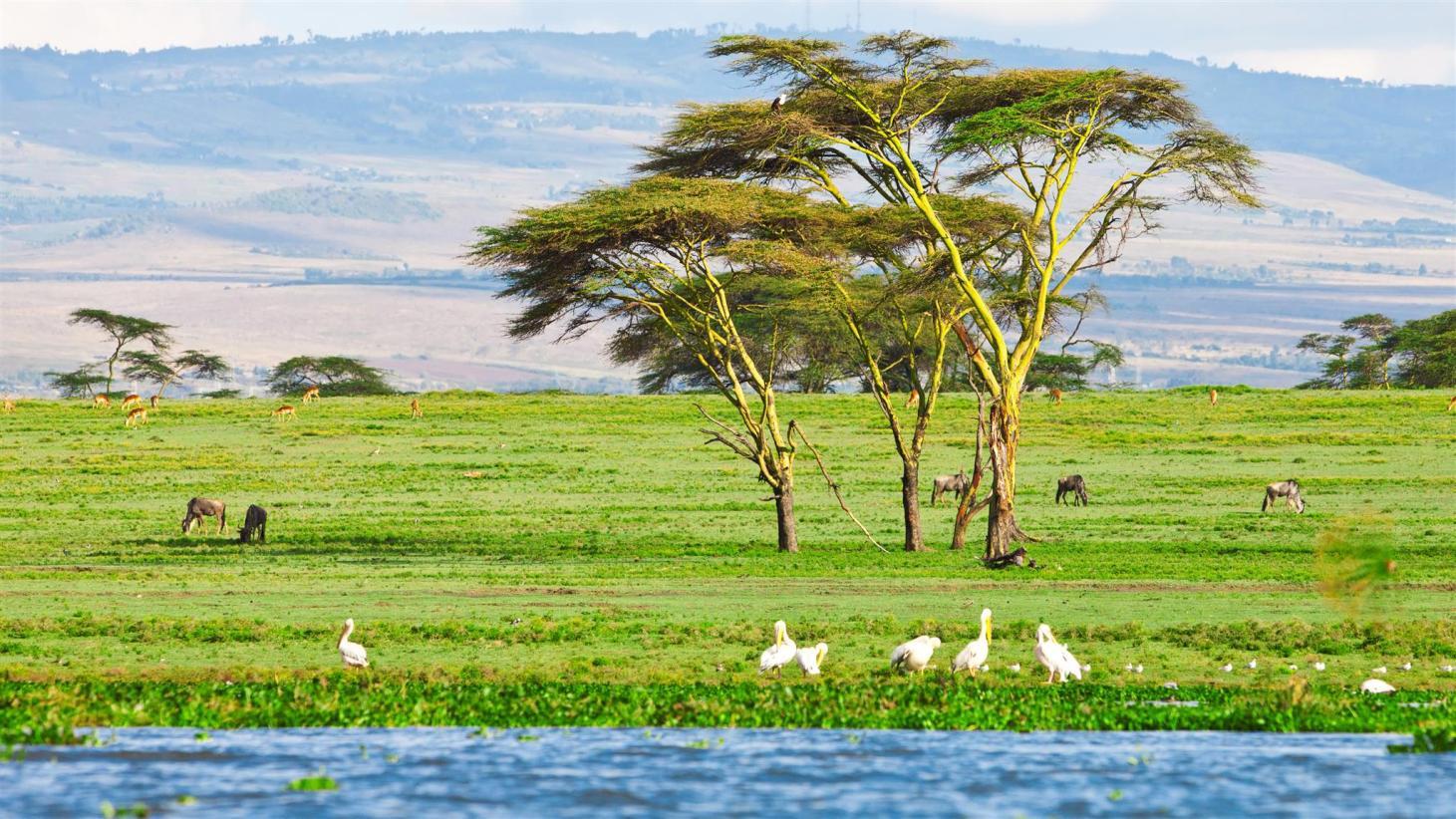 6 Days 5 Nights Nairobi –  Lake Nakuru –  Masai Mara – Nairobi
