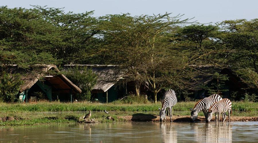 9 Days Mt.Kenya/Samburu/Sweetwaters/Masai Mara