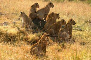 Dik Dik Safari 4-Days Tsavo East Amboseli Tsavo West