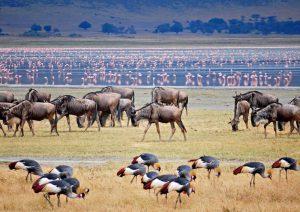 5-days Arusha Tarangire Serengeti Ngorongoro Lake Manyara Arusha