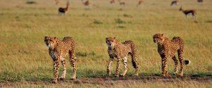 Masai Mara from Mombasa