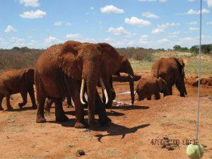 Kenya safari from Mombasa