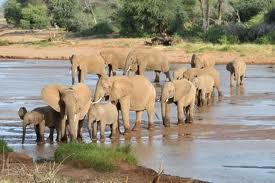 Safaris from Nairobi