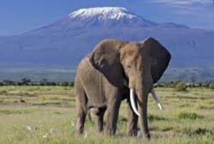 Nairobi to Mombasa safari
