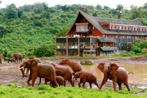 Nairobi Kenya safaris