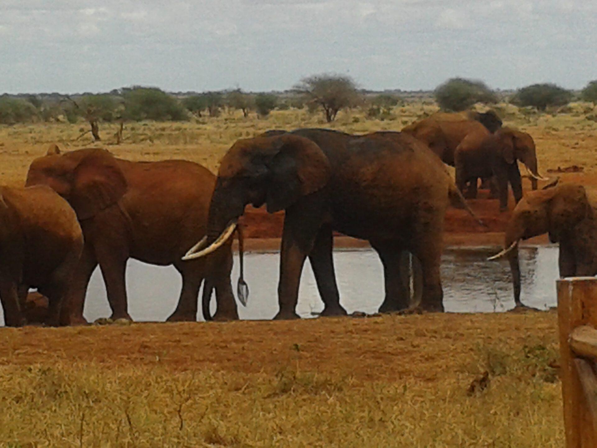1 Day Tsavo East National Park