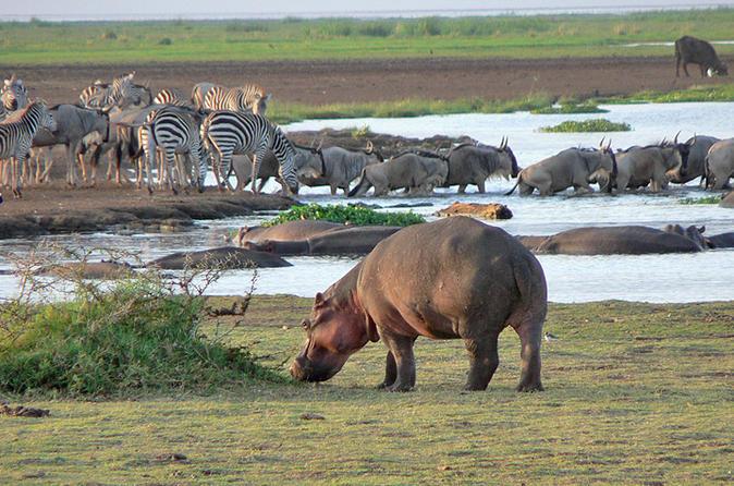 Tanzania safaris & day trips