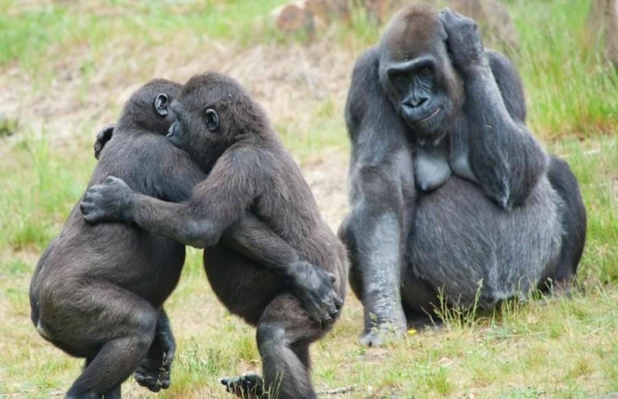 Uganga Gorilla Trecking Safaris