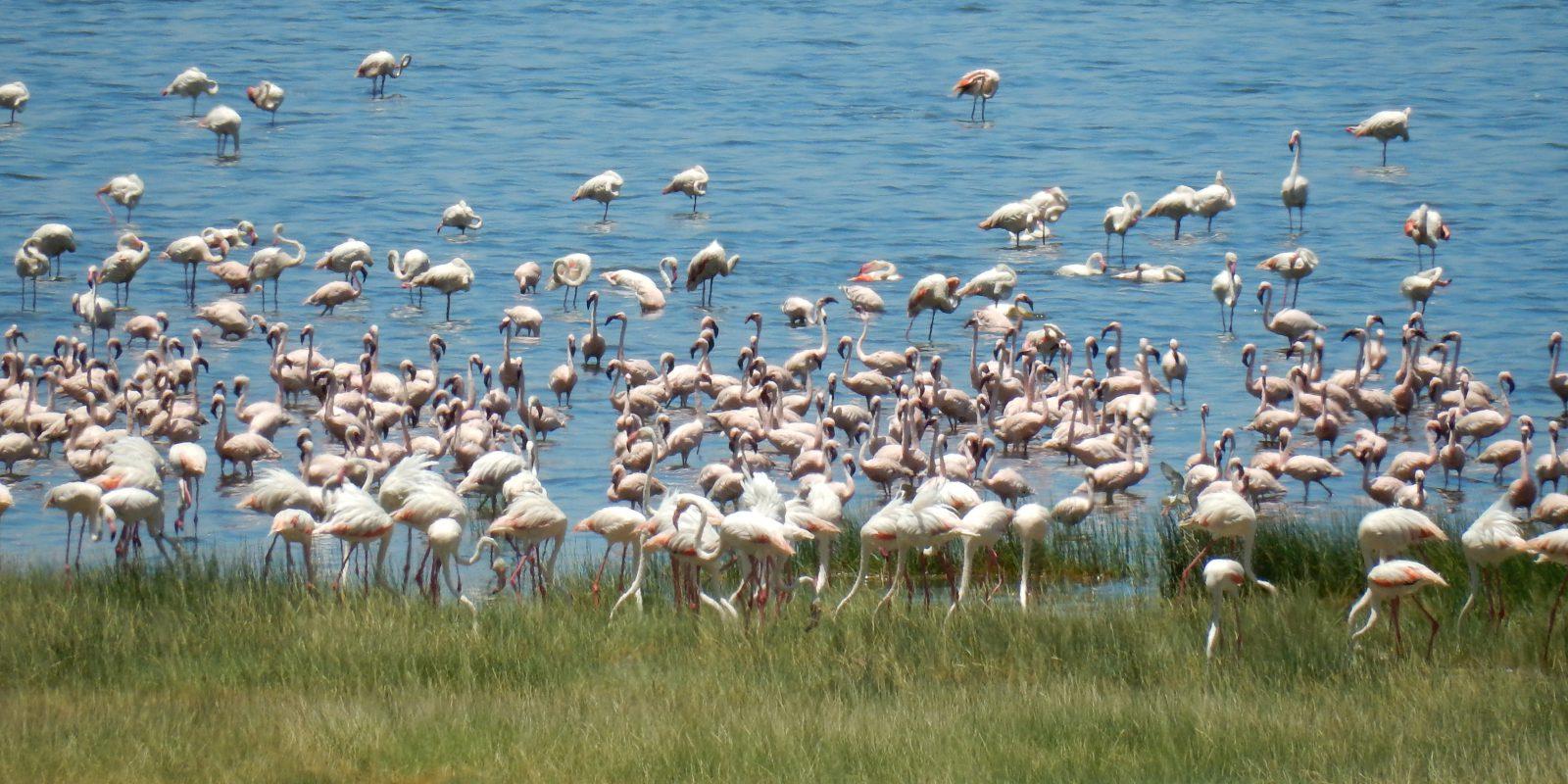 2-Days Lake Nakuru