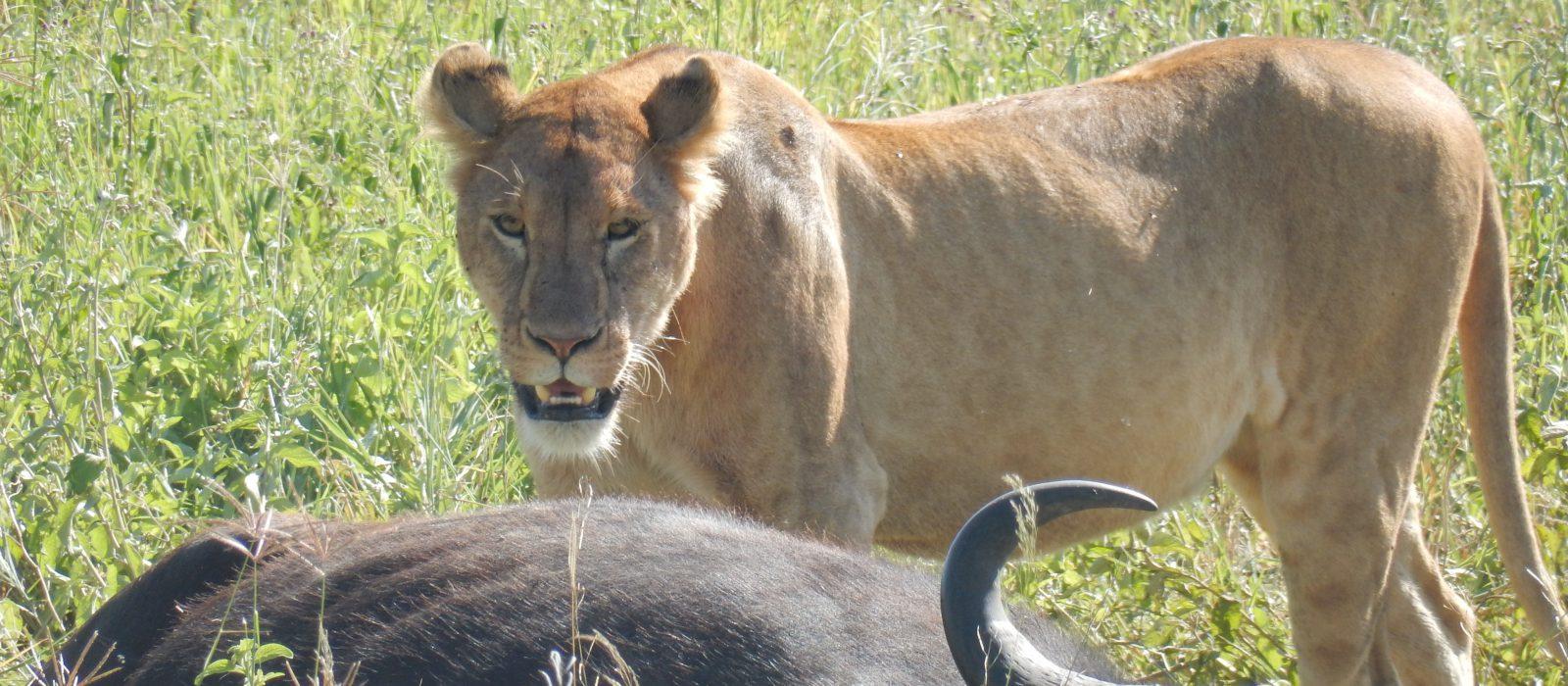 Nakuru Masai Mara Safari.