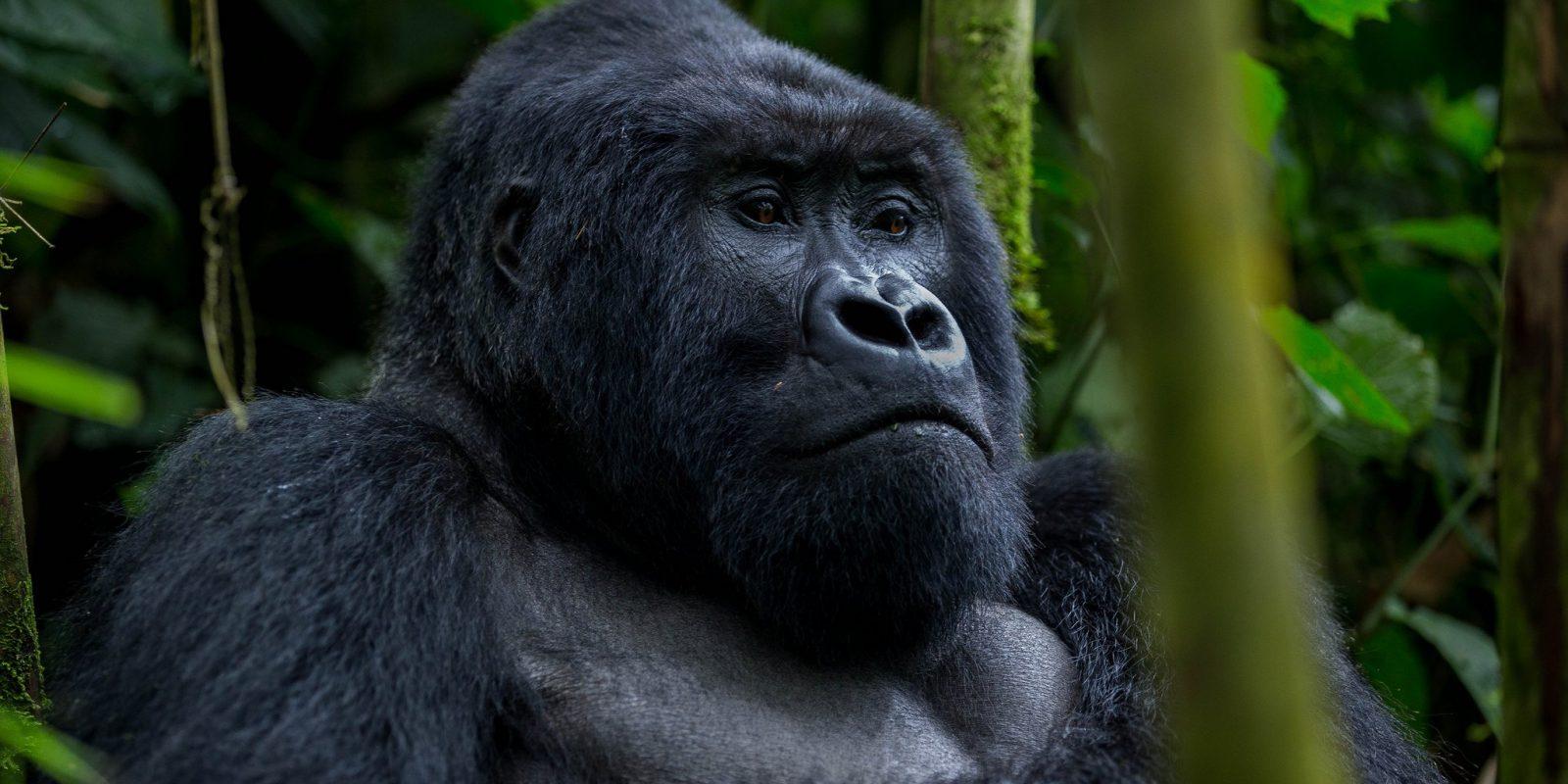 6-Days Uganda Gorilla safari