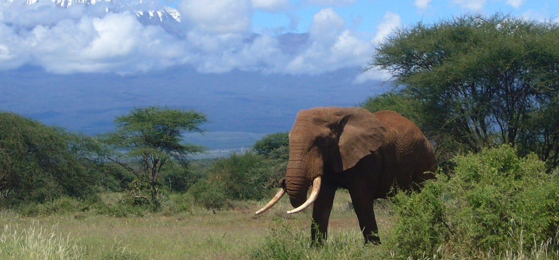 Nairobi Amboseli Safari