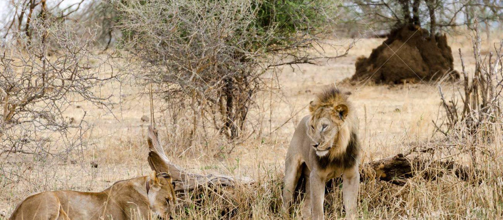 4-Days Tsavo Amboseli & TaitaHills