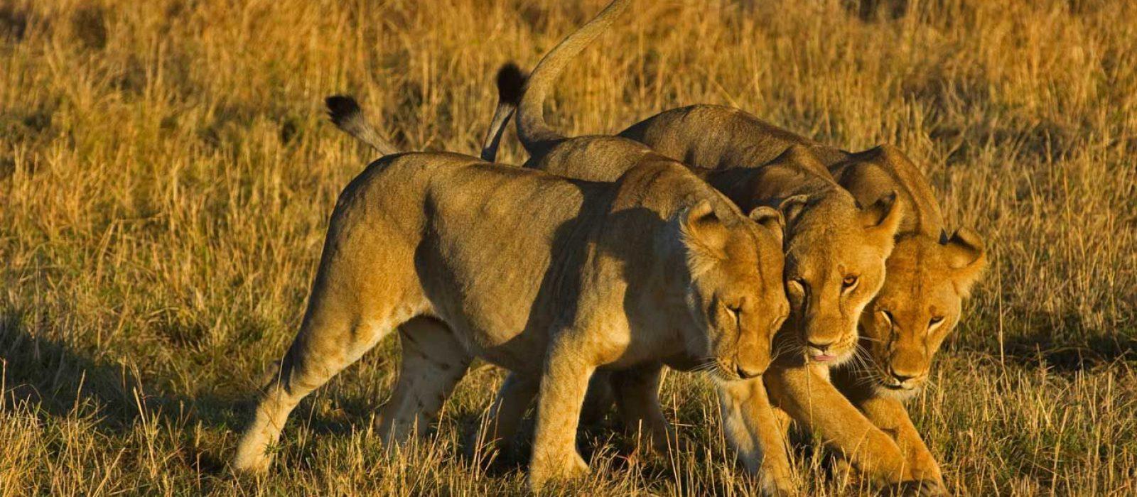 Samburu masai mara safari