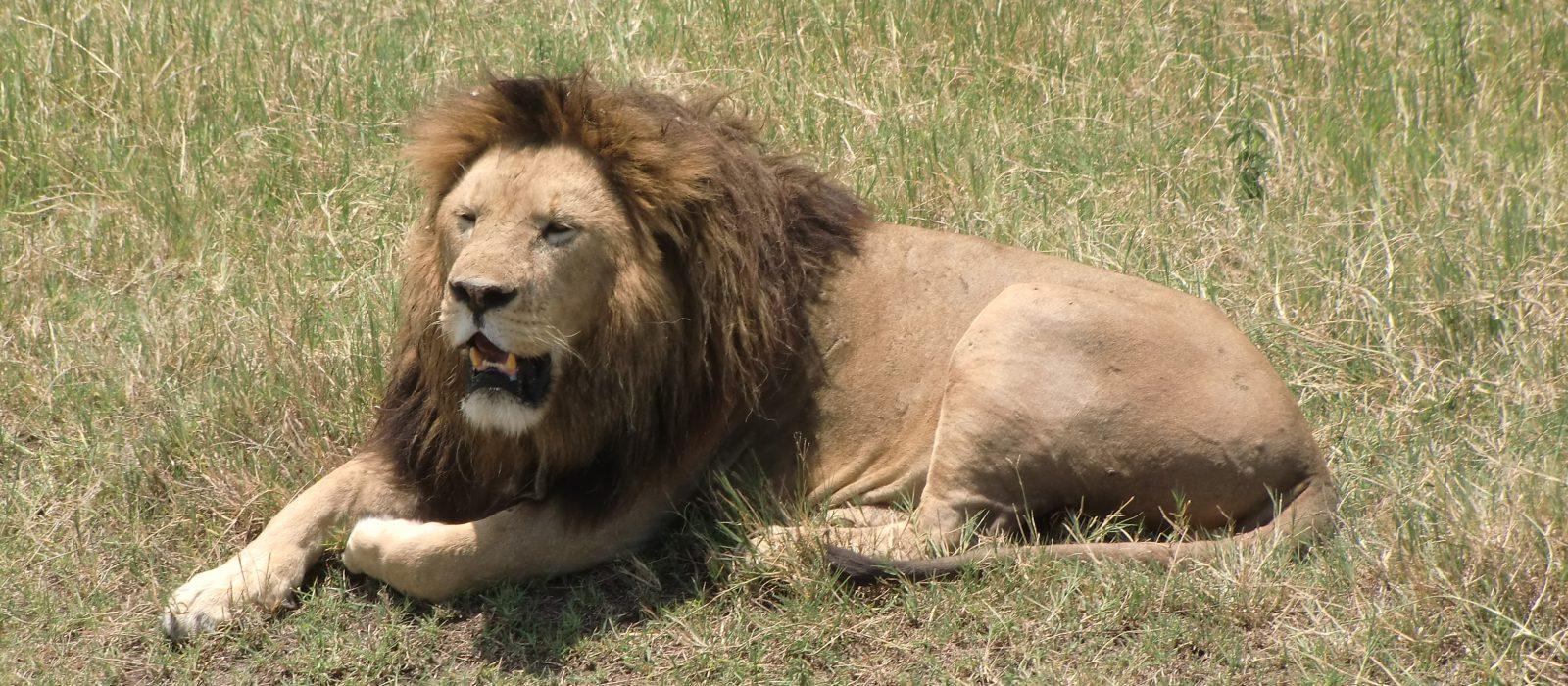 22-Days Masai Mara safari