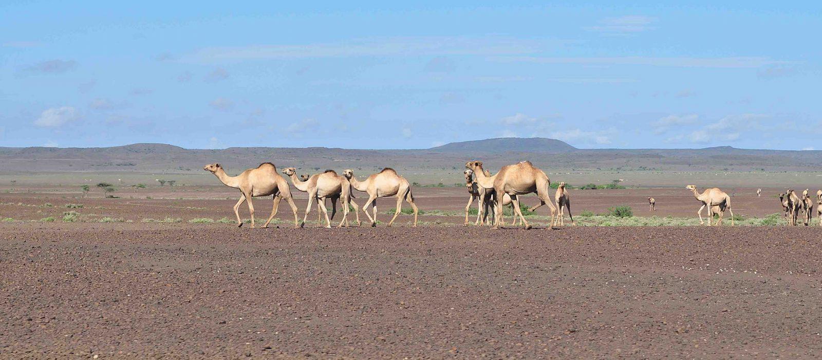 Chalbi desert budget safari