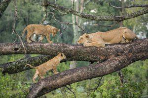 Kenya Safari from Arusha Tanzania