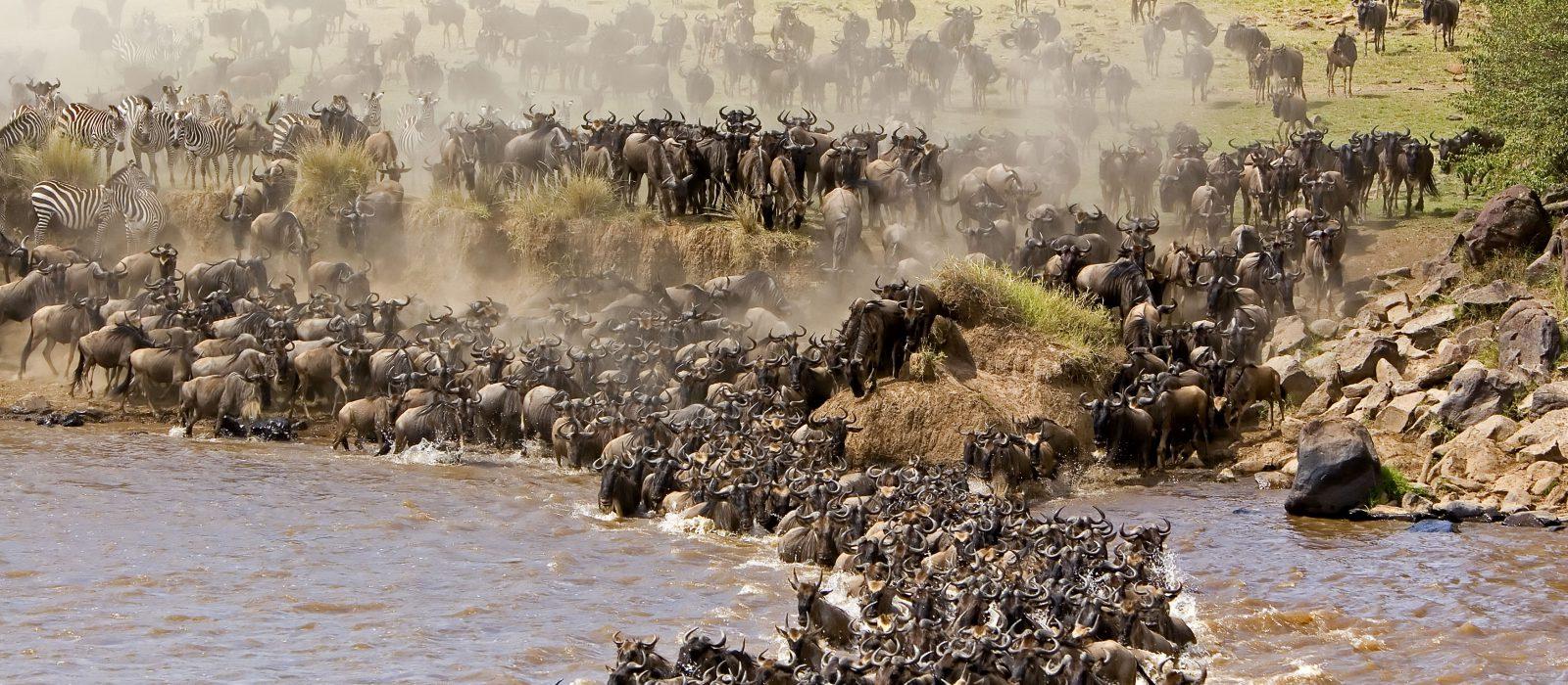 Ringo Safaris - Kenya safari