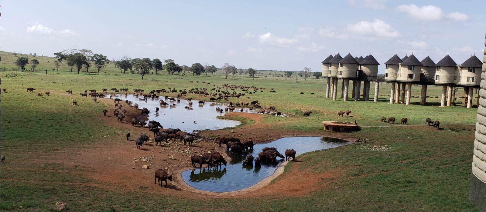 3-Days TaitaHills and Amboseli