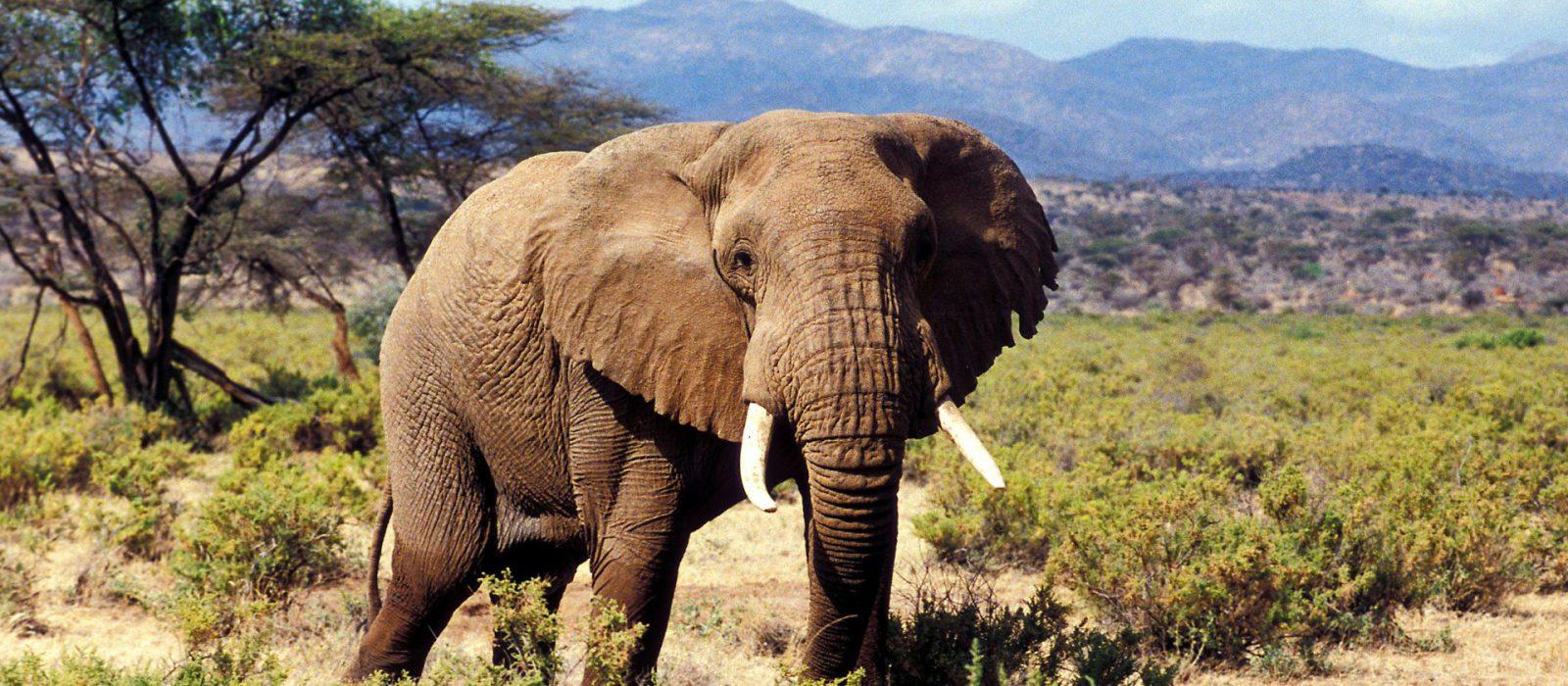 Safari from Nairobi